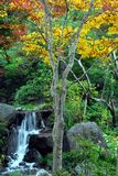 Waterfall and yellow tree Royalty Free Stock Image