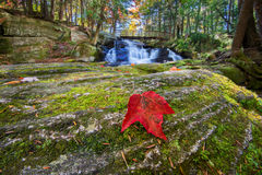Waterfalls Background with Red Maple Leaf on Rock. A close up of red maple leaf on a moss covered rock.  Behind the rock is a beautiful waterfall with a bridge Royalty Free Stock Photos