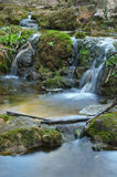 Waterfalls and bamboos Royalty Free Stock Image