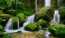Waterfalls. Beautiful waterfalls of a mountain river with mossy stones and trees Stock Images