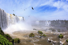 Waterfalls and birds in Brazil Royalty Free Stock Photo