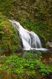 Waterfalls in the Black Forest Royalty Free Stock Images