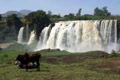 Waterfalls in Ethiopia royalty free stock photos