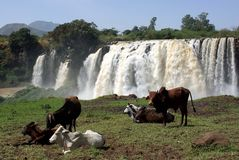 Waterfalls in Ethiopia Royalty Free Stock Photography