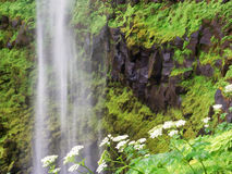 Waterfalls and flowers Royalty Free Stock Photo