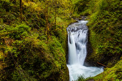 Waterfalls in the forest Royalty Free Stock Image