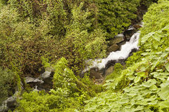 Waterfalls in forest Royalty Free Stock Photos