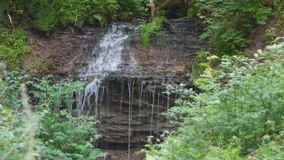 Waterfalls among forest thickets stock video