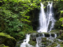 Waterfalls in green 9. An interesting waterfalls situated in New Brunswick Royalty Free Stock Images