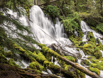 Waterfalls and mossy logs Stock Photography