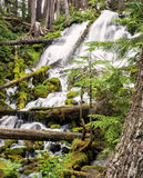 Waterfalls and mossy logs Royalty Free Stock Image