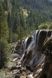 Waterfalls by Pine Forest Stock Images