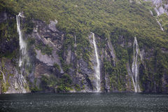 Waterfalls pooring down in Milford Sound Stock Image