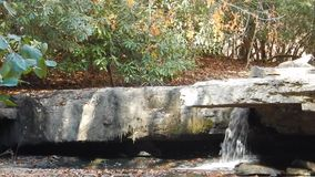 Waterfalls & Rhododendron Camp Creek State Park stock footage