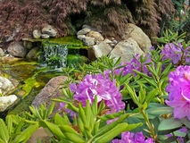 Waterfalls and rhododendron Stock Image