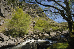 Waterfalls on River Tywi Royalty Free Stock Photo