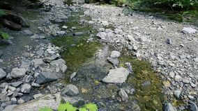 Waterfalls and rivers in forest touristic trail. Transfagarasan, Romania stock video