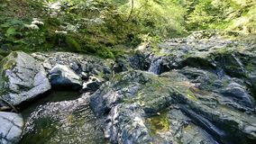 Waterfalls and rivers in forest touristic trail. Transfagarasan, Romania stock footage