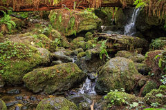 Waterfalls on a rocky stream. Cascading water through a mossy channel Stock Images