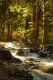 Waterfalls on stream in forest. Scenic view of waterfalls on stream in sunlit forest Royalty Free Stock Photo