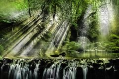 Waterfalls Surrounded by Trees Stock Photography
