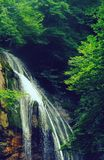 Waterfalls Beside Trees Royalty Free Stock Images
