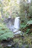 Rainforest redwood forest waterfall Royalty Free Stock Photography