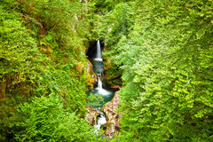 Waterfalls into a will deep forest Royalty Free Stock Photo