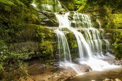 Waterfalsl Tasmania Fotografia Stock