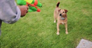 Waterfight con el perro almacen de metraje de vídeo