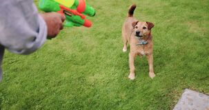 Waterfight met de Hond stock videobeelden