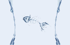 Waterfishbone Kader Royalty-vrije Stock Afbeeldingen