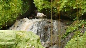 Waterflow i templet som omges vid, vaggar täckt med ljust - grön mossa lager videofilmer