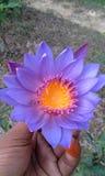 Waterflower Stock Photography