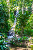 Waterfountain - ботанический сад Рио-де-Жанейро, Бразилия Стоковая Фотография RF