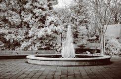 Waterfountain botánico infrarrojo Imágenes de archivo libres de regalías