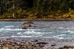 Waterfowl湖,班夫国家公园,亚伯大,加拿大 库存照片