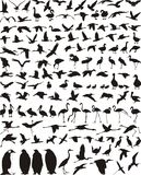 waterfowl птиц Стоковые Изображения RF