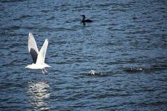 waterfowl arkivbilder