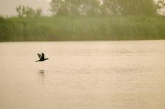waterfowl Photos libres de droits