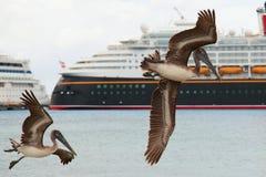 waterfowl Foto de Stock Royalty Free
