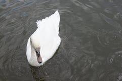 waterfowl Imagen de archivo