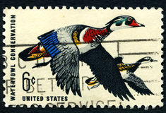 Waterfowl Conservation USA Postage Stamp Royalty Free Stock Photo