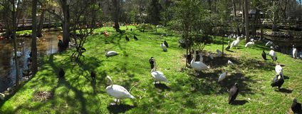 Free Waterfowl Island - Homosassa Springs Royalty Free Stock Photography - 13253977