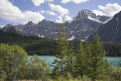 Waterfowl lake Royalty Free Stock Images
