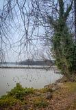 Waterfront and beautiful ducks at the Leman lake Stock Photos