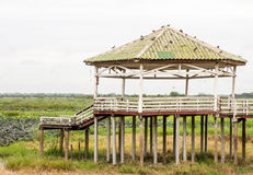 Waterfront pavilion on dry areas Stock Photo