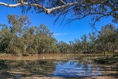 Waterhole в реке Moonie Стоковые Изображения RF