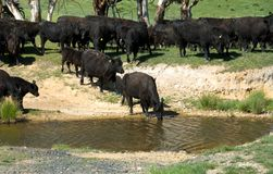 At the Waterhole Stock Photo