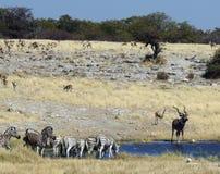 Waterhole africano Fotos de Stock Royalty Free